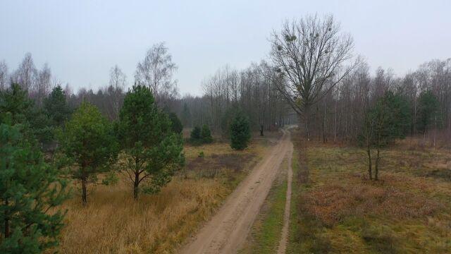 Kuria chce przejąć 30 hektarów lasu. Pod cmentarz. Mieszkańcy protestują, decyzja należy do ministra