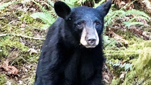 Robili selfie z niedźwiedziem. Zwierzę zostało uśpione