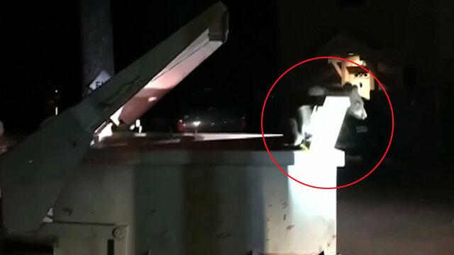 Niedźwiadek utknął w śmietniku. Z pomocą przyszli policjanci