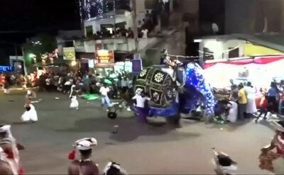 Słoń staranował ludzi podczas parady na Sri Lance