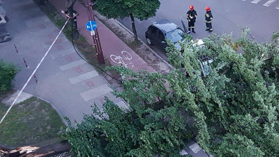 Wielka lipa runęła na chodnik i ulicę. Miasto: to nie nasze drzewo