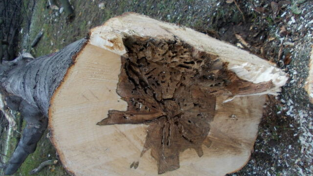 Afera w dolnośląskich lasach. Policja: fałszowanie dokumentów i nielegalna wycinka drzew