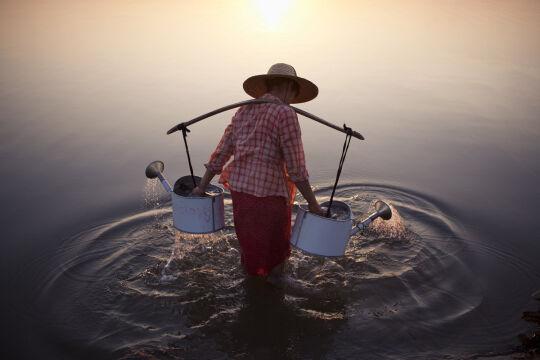 Wyróżnienie - Lady in Water