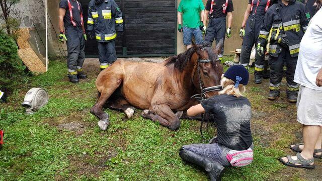 Koń wystraszył się burzy, wpadł do kanału w garażu. Wyciągali go strażacy
