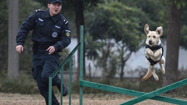 Igrzyska w Tokio dodatkowo zabezpieczone. Antyterrorystom pomogą psy