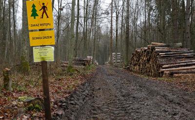 """Patrole ekologów po wyroku o karach. """"Jedna maszyna wycofała się z lasu"""""""