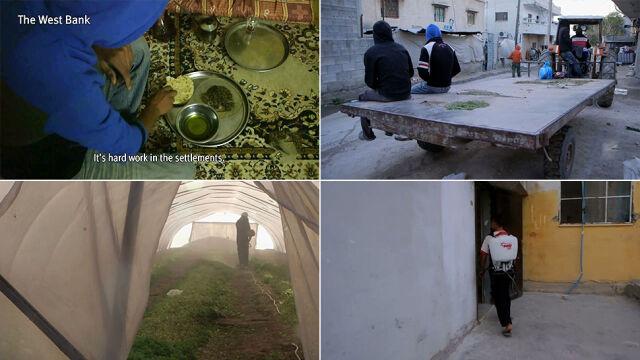 HRW: żydowscy osadnicy wykorzystują do pracy palestyńskie dzieci