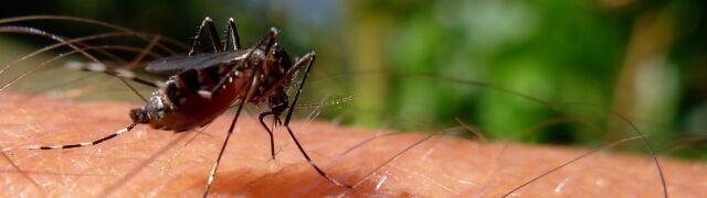 Sposób na komary. Jakie rośliny odstraszają owady?