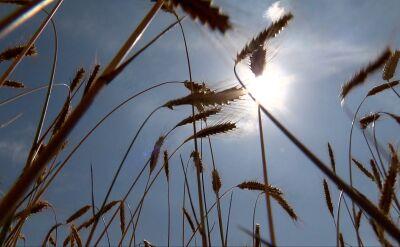 Nowy rekord temperatury w Polsce w czerwcu