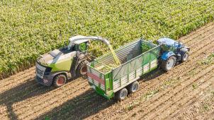 Ktoś niszczy maszyny, a pola kukurydzy marnieją.