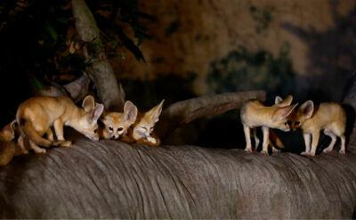"""""""Podczas nocnych wizyt w zoo, można poczuć zupełnie inną atmosferę"""""""