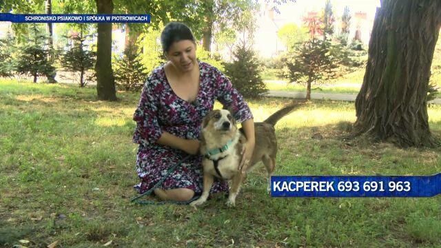 Przyjacielski Kacper szuka spokojnego domu