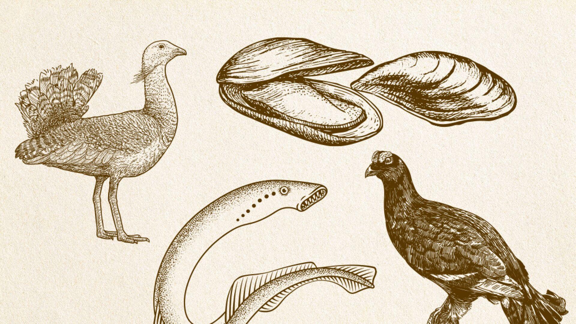 Bobry I żubry Wylądują Na Naszych Stołach Kiedyś Jedliśmy