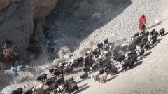 Mieszkańcy Mustangu żyją m.in. z hodowli zwierząt