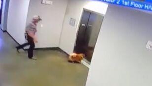 Pies przed windą pokonał rywali