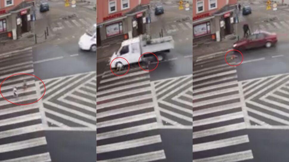 Ranny pies leży na ulicy, kierowcy tylko go omijają
