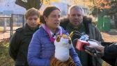 Dyrektorka poznańskiego zoo o uratowaniu tygrysów