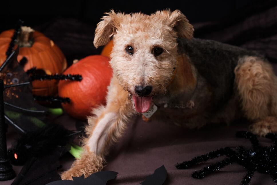 Sesja ze zwierzakami w klimacie halloween