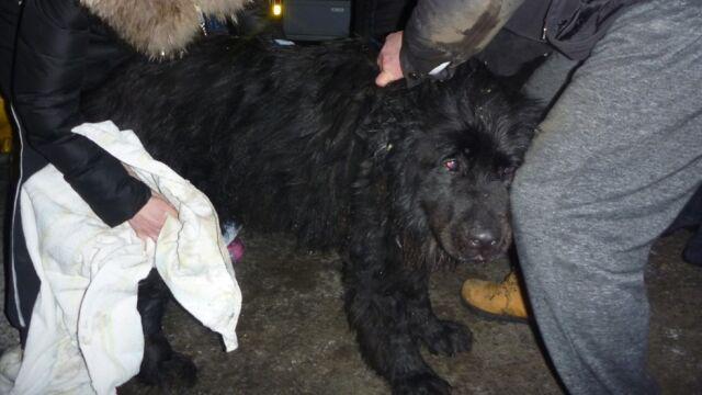 Pies utknął w głębokiej studni. Pomogli strażacy i ratownicy
