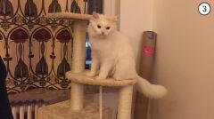 Zastępcza opiekunka zagwarantowała kotu rozrywkę