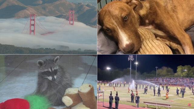 Psi cud czy szop przyjaciel? Wybierz najciekawsze wideo tygodnia w tvn24.pl