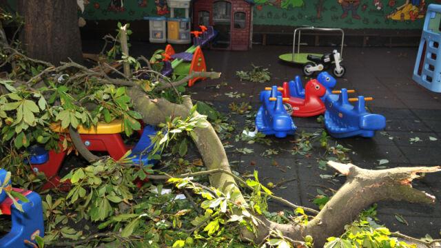 Konar spadł na przedszkolaków bawiących się na placu zabaw