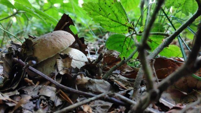 Wrzesień to czas na grzybobranie.  Jakie grzyby zbierać?
