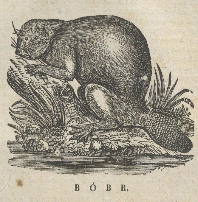 """Bóbr, rycina z """"Magazynu dla dzieci"""", nr 48, 3 grudnia 1835 rok"""
