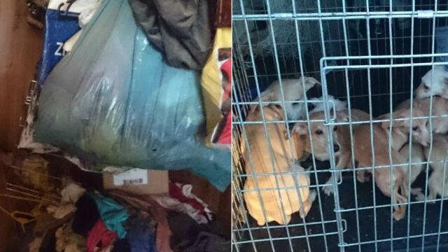 Mieszkanie jak wysypisko: góra śmieci, dwoje dorosłych i ponad 20 psów