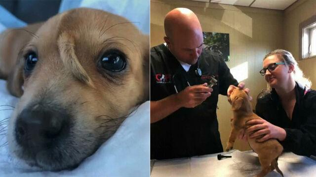 Pies z ogonkiem na czole urzekł internautów. Najciekawsze wideo tygodnia w tvn24.pl