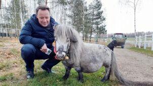 Bombel jest najmniejszym koniem na świecie