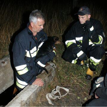 Uratowali psa wrzuconego do studzienki