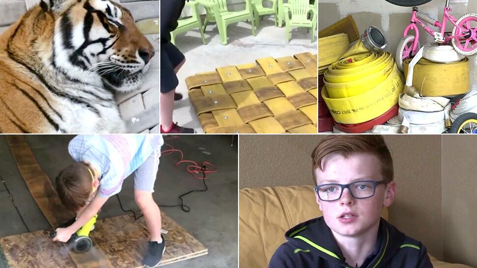 Leżaki dla tygrysów z węży strażackich skradły wasze serca. Najciekawsze wideo tygodnia w tvn24.pl
