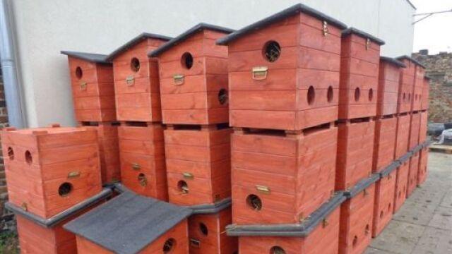 W Gdańsku rozdają kocie domki dla bezdomnych zwierząt