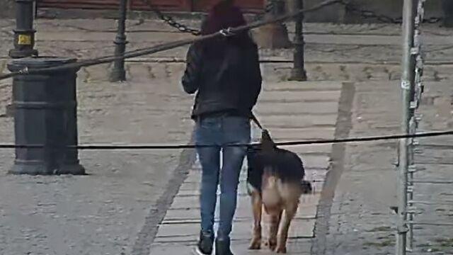 Za psie kupy stanie przed sądem