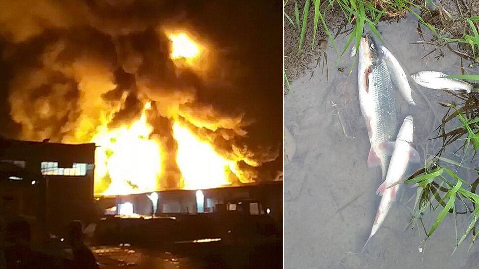 """""""Tony martwych ryb"""" po pożarze magazynu chemikaliów. Urzędnicy: nie ma skażenia"""
