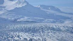 Renifer na tle lodowca