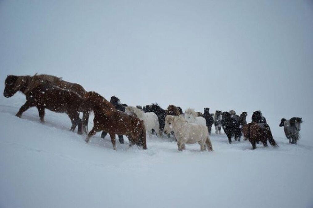 Powrót do stajni, nadciąga burza snieżna