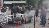 Koń przewrócił się pod Wawelem