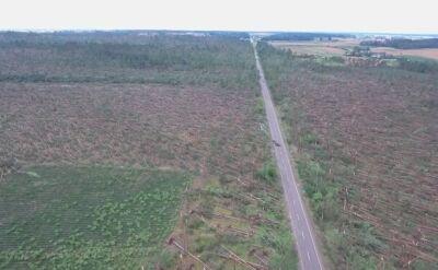 Lasy państowowe o zniszczeniach na Pomorzu