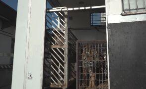 Koroszczyn: tygrysy utknęły na granicy z Białorusią. Jeden zdechł