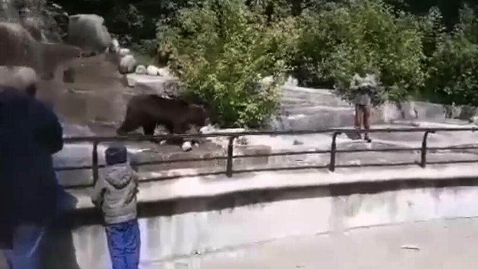 23-latek wtargnął na wybieg w zoo. Próbował podtopić niedźwiedzicę