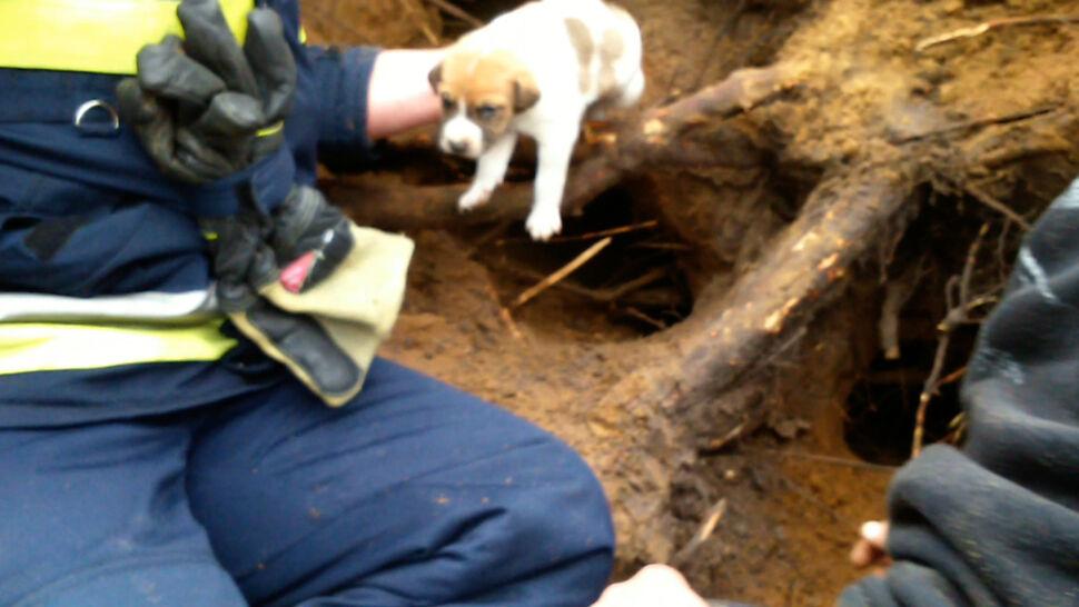 Urodziła szczeniaczki w lisiej norze. Pomogli strażacy