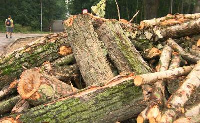 Dostali z Unii dotację na tereny zielone. Zaczęli od wycinania drzew