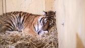 """W ich oczach """"czai się strach i ogromna rozpacz"""". """"Muszą teraz zebrać tygrysie siły"""""""