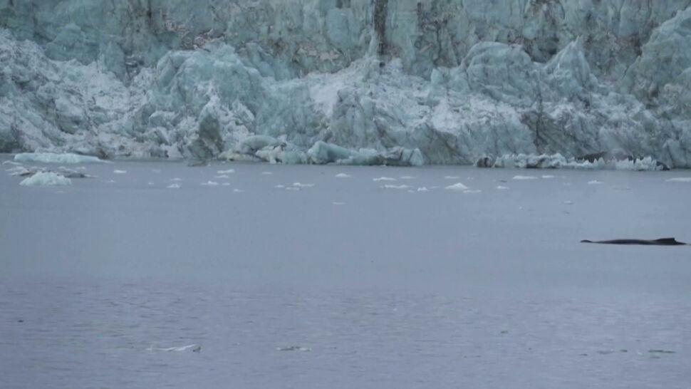 """""""Jeśli nic się nie zmieni, to za kilka dekad w lecie Arktyka będzie wolna od lodu"""""""