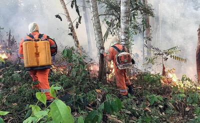 Puszcza Amazońska płonie. Rząd Brazylii nie ma środków na walkę z pożarem