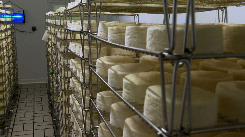 Jest ulubionym serem francuzów. Unia uregulowała status camemberta