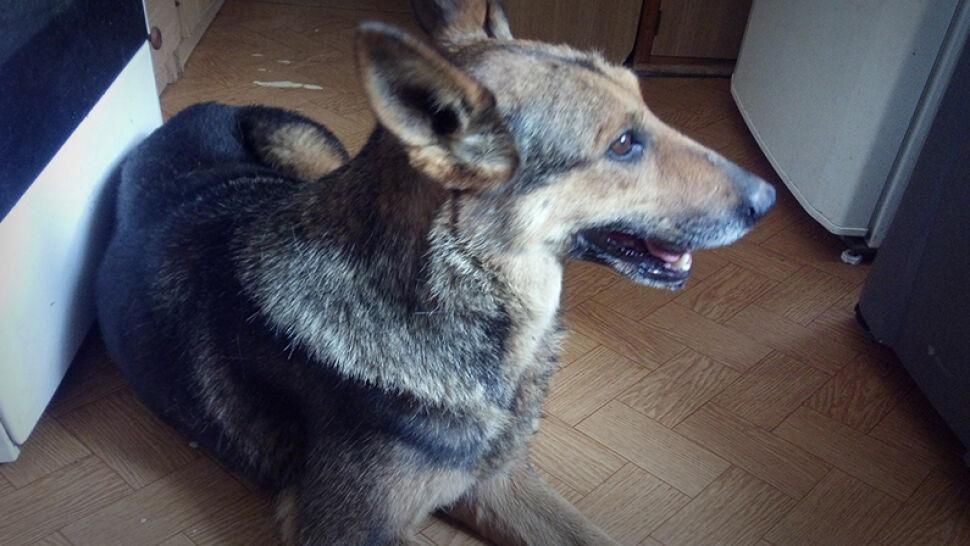 Pies tkwił uwięziony w kanale burzowym. Dopiero po tygodniu usłyszano jego szczekanie