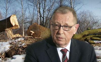 20.02.2017 | Drzewa znikają, urzędnicy rozkładają ręce. Opozycja pyta, czy Szyszko miał interes we wprowadzeniu zmian